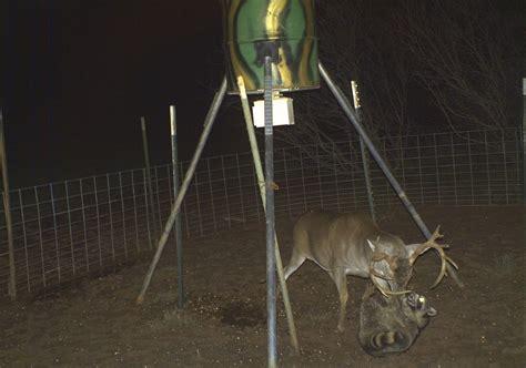 homemade wooden deer feeder plans plans diy