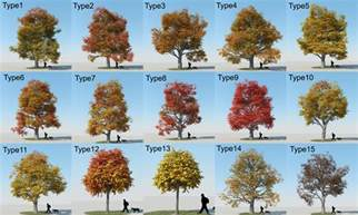 types of maple tree leaves 53479 dfiles maple trees pinterest maple tree