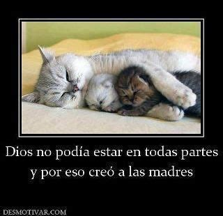 imagenes bonitas de animales animales and frases on pinterest