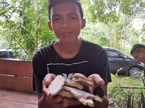Ginseng Lokal begini kearifan lokal pengelolaan hutan untuk pengobatan