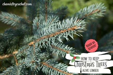 how to preserve an xmas tree how to keep trees alive longer based on science