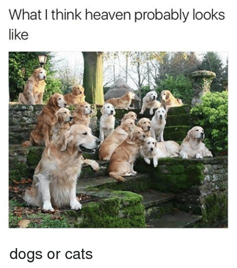 cats that look like dogs what think heaven probably looks like dogs or cats dogs meme on sizzle