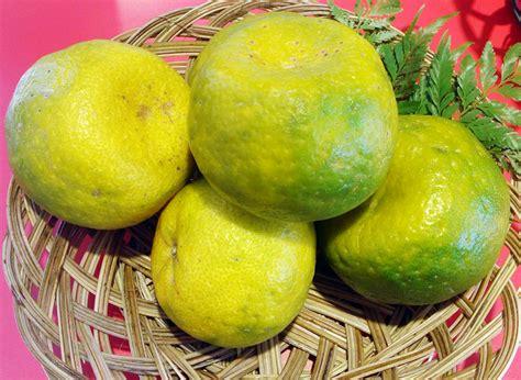 Bibit Jeruk Purut Di Garut sohornya jeruk keprok garut bebeja