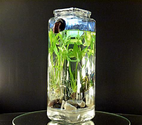 aquascape tanpa filter membuat filter aquarium tanpa listrik 1000 aquarium ideas