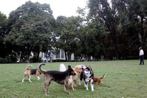 vaglia d italia le aree riservate ai cani