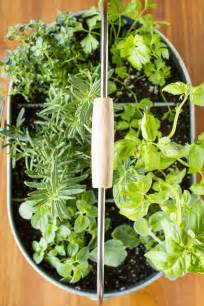 easy herb garden easy indoor herb garden simple 10 minute diy project