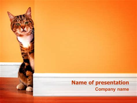 curious cat presentation template for powerpoint and