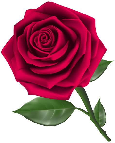 rosa clipart roses with bud transparent clip picture