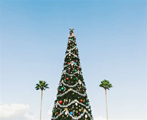 how to celebrate christmas in the southern hemisphere ef