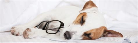 sleeping with your should you sleep with your pet health risks and benefits tuck sleep
