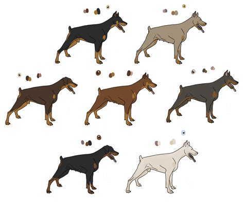 doberman colors most popular color for doberman pictures to pin on