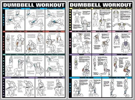 dumbbell exercises diagrams biceps and triceps workout at home with dumbbells eoua