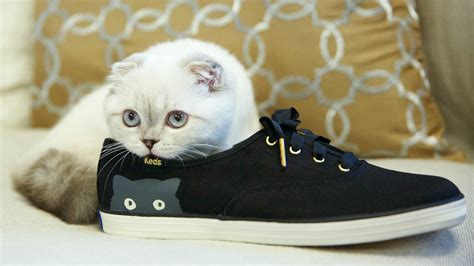 taylor swift cat advertisement taylor swift s cat olivia benson cuddles up in a keds