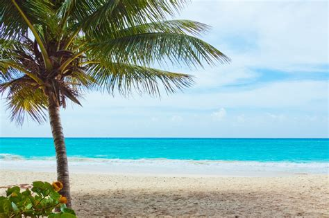 with palm tree island pippi s pictures of palm trees on the