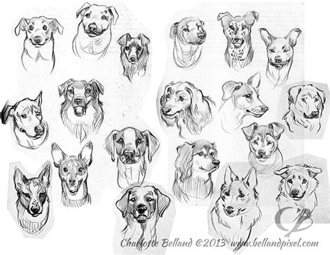 dog portrait reference drawings bellandpixel
