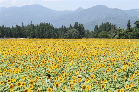 Resultado de imagem para prado de flores