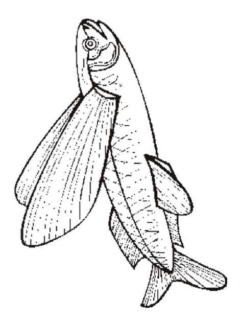 coloring pages of parrot fish parrotfish colouring pages coloring pages of parrot fish