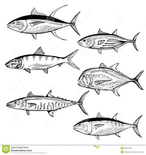 king mackerel coloring pages related keywords suggestions for mackerel fish drawing