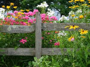 Best Flowers For Garden List Of The Best Perennial Flowers Diy