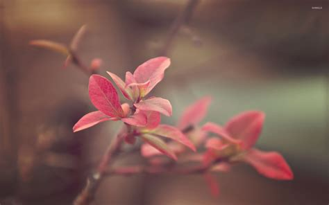 wallpaper pink leaves pink leaves wallpaper nature wallpapers 31923