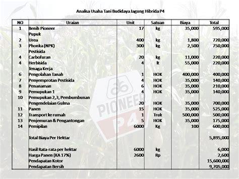 Bibit Jagung Hibrida balai penyuluhan kecamatan bpk kecamatan lenteng kab