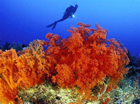 walea dive resort sulamesi s 233 jour plong 233 e 224 walea seven seas votre