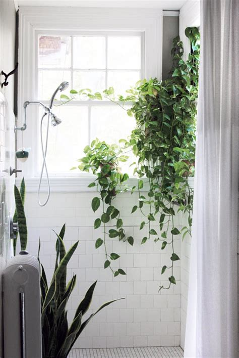 indoor bathroom plants a sunny bathroom makes a great place for indoor plants