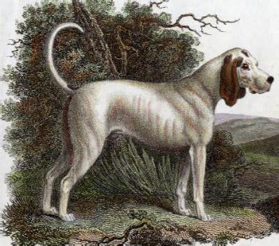 oldest living shih tzu world s oldest living breeds