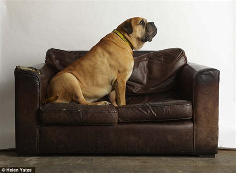 dog on a couch my dog doesn t match my sofa animal charities reveal