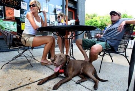 places that allow dogs health dept to allow friendly outdoor dining arlnow