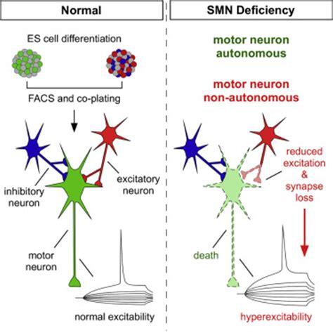 als motor neuron motor neuron center