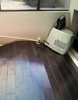 Floor Buckling Repair by Buckled Hardwood Floors Analysis Why Fixes