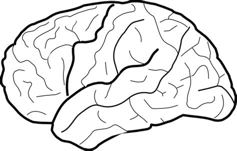 White Brain white brain clip at clker vector clip