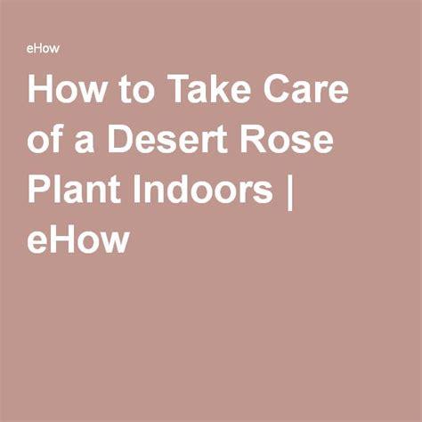 die besten 17 ideen zu desert rose plant auf pinterest