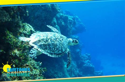 glass bottom boat tours aruba snorkeling glass bottom boat safe tours cozumel