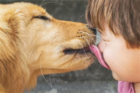 puppy licks and what it means dogtime