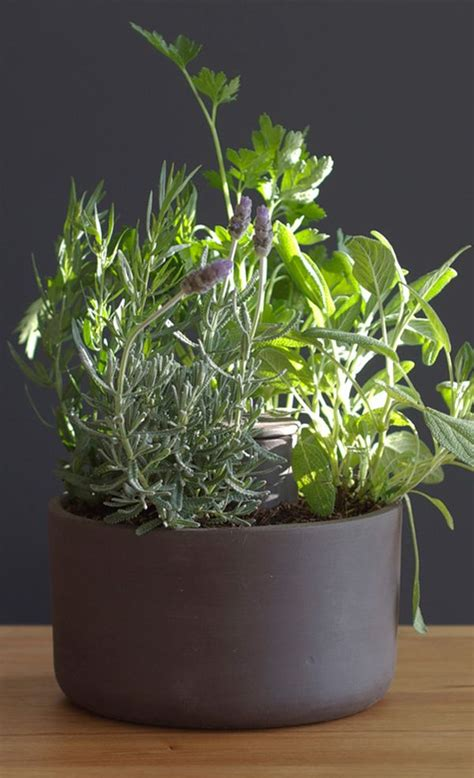 Self Water Planter by Joey Roth Self Watering Planter