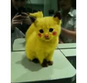 Chat D&233guis&233 En Pikachu Pokemon  Lol Images Photos Et