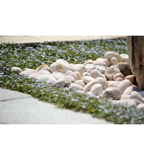 ciottoli da giardino prezzi ciottoli per giardino prezzi ciottoli da giardino bianco