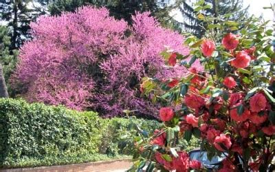 arbusti ornamentali da giardino arbusti ornamentali