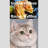Cat Heavy Breathing Chipotle | 600 x 1020 png 1179kB