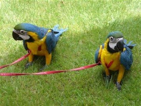 parrots vet plymouth in birds connecticut free classified ads