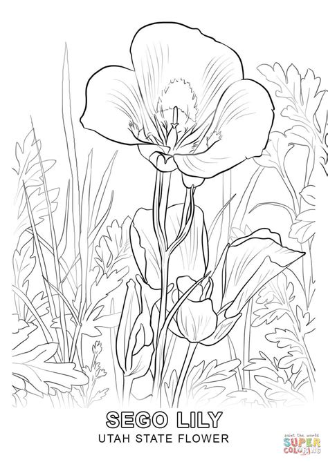 coloring pages utah utah state flower coloring page free printable coloring