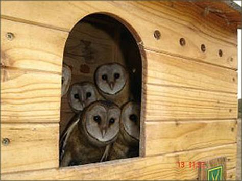 Barn Owl Box Plans Welcome To Birdlife South Africa Build Your Own Owl House