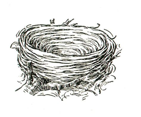 coloring sheet bird s nest bird nest coloring book pinterest