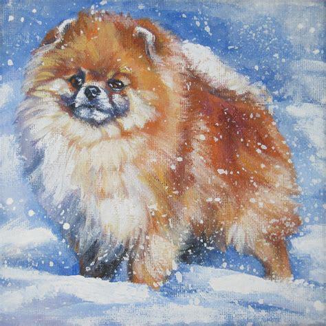 annes pomeranians pomeranian in the snow by shepard