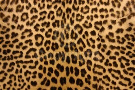 leopard print photo groovee66 photobucket