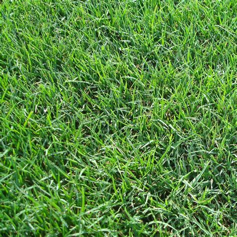 grass sod best zoysia sod in houston is sod dirt sod