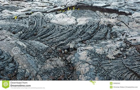 what is in a lava l old lava flow kilauea big island hawaii stock photo
