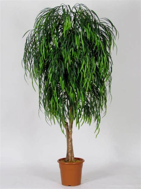 salice piangente in vaso salice willow medium 164 uvr altezza cm 225 216 vaso
